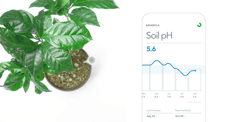 raykovich_plot_plant